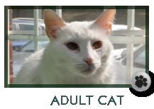 Adult Cat Care, Marietta GA