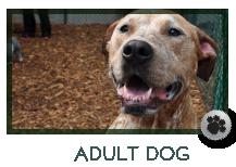 Adult Dog Care Marietta, GA