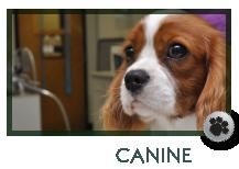 Canine Wellness in Marietta, GA