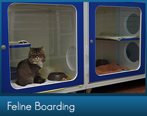 Cat Boarding in Marietta GA