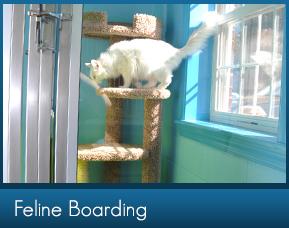 Cat Boarding in Marietta GA