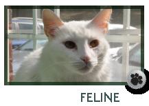 Feline Wellness Care in Marietta GA