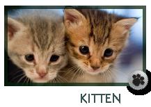 Kitten Care Marietta GA