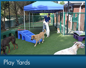 Doggie Day Camp in Marietta GA