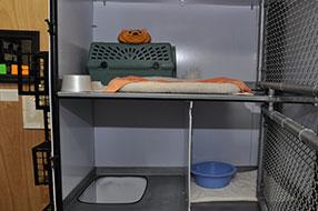 Montrose Animal Hospital Feline Boarding