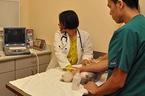 Montrose Animal Hospital Dr. Tamassasia