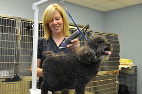 Montrose Animal Hospital Canine Grooming