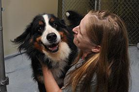 Montrose Animal Hospital Canine Boarding