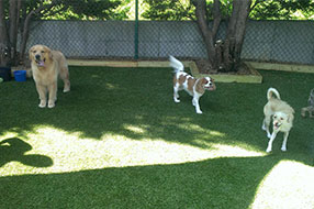 Montrose Animal Hospital play time