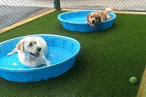Montrose Animal Hospital pool time