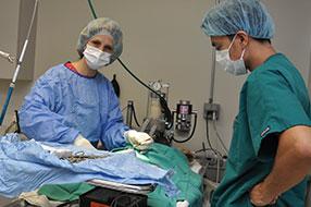 Montrose Animal Hospital Dr. Webster Surgical