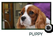 Puppy Care Marietta GA