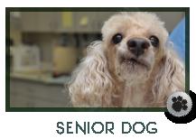 Senior Dog Care Marietta, GA