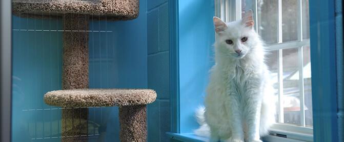 Montrose Animal Hospital & Pet Hotel Marietta GA