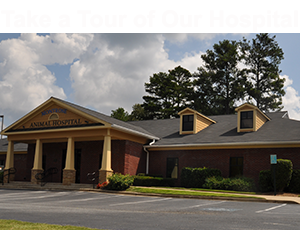 Montrose Animal Hospital Video Tour